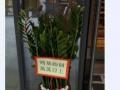 石碣鲜花绿植配送上门生日送花表白鲜花送花情侣老婆