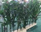 仿真桃花树樱花树许愿树仿真竹子假玉米厂家定做