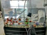 鱼缸清洁换水调节水质服务