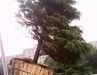 修树-北京修树-伐树