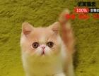 猫舍低价出售加菲猫包纯种保健康疫苗已做