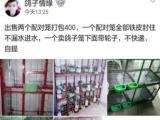 电焊笼,出售鸽,大量收购鸽子