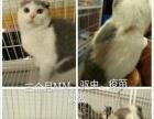 宠物 猫世界
