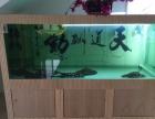 虹鱼虎鱼各种尺寸