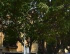 新华都附近 博爱医院旁 城西 大同小学 城西菜市场 新装三房