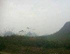 (优质)广西省南宁市上林县西燕镇600亩旱地出租