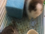 龙猫 猫猫兔。