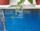 济南出售两鱼缸