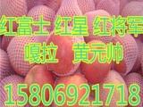 山东红富士苹果价格.20N