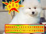 狗证 健康证 血统证 纯种健康萨摩耶幼犬 签订协议