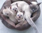卖幼猫,后面的是幼猫的父母