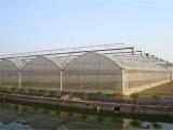 内蒙古 蔬菜连栋薄膜温室大棚 建造商