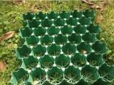 消防通道植草格 塑料草坪格 泰安加强型植草格厂家领导品牌