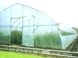 单栋塑料温室大棚、钢管大棚、蔬菜大棚