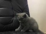 自家猫生的一只小母