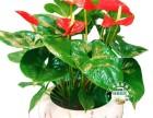 上海植物租摆租赁室内养护植物租赁租摆花卉租赁租摆