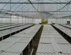 农业标准大棚出租