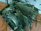 昆明专业 家庭 餐厅 酒店 灭鼠灭蟑螂 除四害