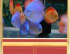 重庆人鱼传奇-厂家直销生态缸、龙缸、风水鱼缸、超白缸