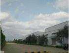 东区白沙湾厂房独院大型单层厂房分租 剩下2000方