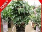 湘潭专业绿植租摆 绿植盆栽 园林绿化。绿化养护