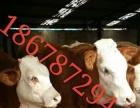 育肥牛犊价格卖小牛犊
