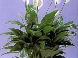 昌平綠植花卉租賃租擺銷售