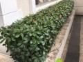 金钟路福泉路协和路天山西路商务楼绿植室外绿化优质供应商