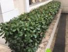 绿植花卉植物租摆长宁区绿植鲜花长宁区植物租摆植物租赁养护