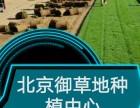 北京海淀草坪基地草坪銷售草坪價格庭院綠化真草坪