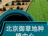 北京丰台草坪基地销售草坪草坪价格带泥土真草坪
