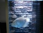 鱼和鱼缸便宜处理