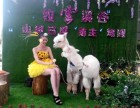 广州白云出租羊驼有矮马租赁