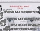 專業辦理各種貓咪血統證書,WCF證書,CFA血統證