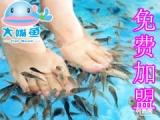 大嘴鱼鱼疗养生 促进血液循环 美容养颜