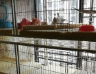 2.1米猫笼,新买不到一个月