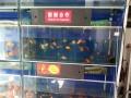 水族馆组缸低价转让