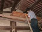 东莞白蚁防治方法 龙科专业资质 精湛技术 丰厚经验