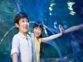 深圳出发港澳游4天香港海洋公园 香港维多利亚 全景