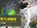 西霞口旅游动物园成山头海驴岛赤山优惠票