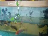 鱼缸1.6米宽500价钱你开