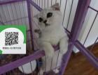 镇江哪里有宠物店 镇江哪里卖宠物猫便宜 镇江折耳猫价格