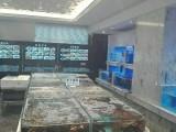 广州观赏鱼海鲜鱼池,广州楼盘海鲜鱼池展览,广州海鲜冷水机,