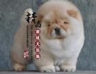 松狮犬幼犬多少钱一只 天津哪里有卖的