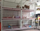 广州宠物医院宠物销售宠物寄养托运