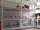 廣州寵物醫院寵物銷售寵物寄養托運