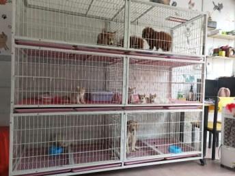 广州宠物销售广州宠物医院宠物寄养