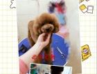 宠物美容师萌系造型培训中心