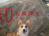 鄭州飛碟寵物訓練學校-專業的寵物訓練基地