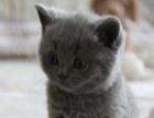 非诚勿扰,母,蓝猫